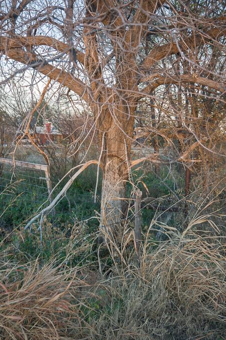 GHarhoff_Boring Brush_1606-12