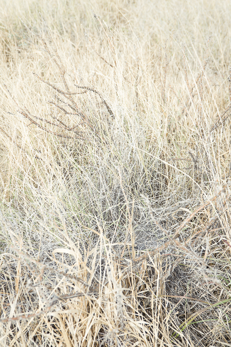 GHarhoff_Boring Brush_1606-14